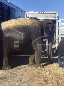 Owner of elephants that got stranded has faced scrutiny