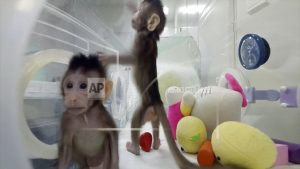 Move over, Dolly: Monkeys cloned; a step closer to people?