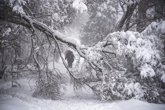 Heavy snow knocks downs thousands of trees in Moscow; 1 dead