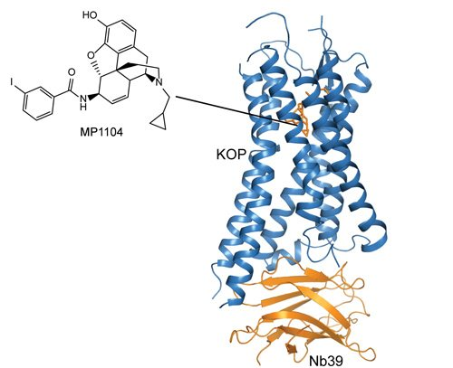 Kappa Opioid Receptor Structure Revealed, A Potential Milestone in Medication Development