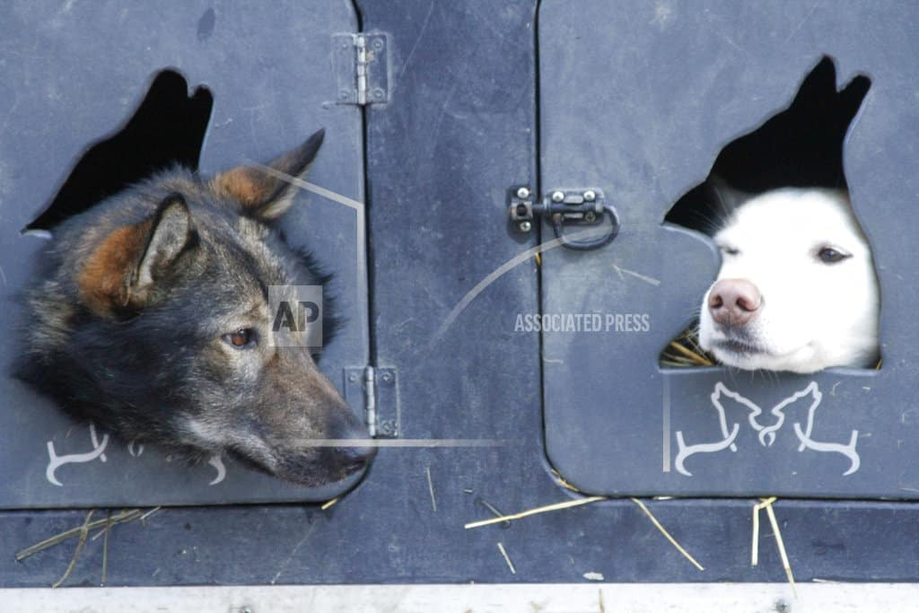 Mushers, fans gather for world's most famous sled dog race