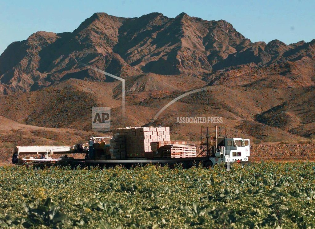 PHOENIX | Americans told to toss romaine lettuce over E. coli fears