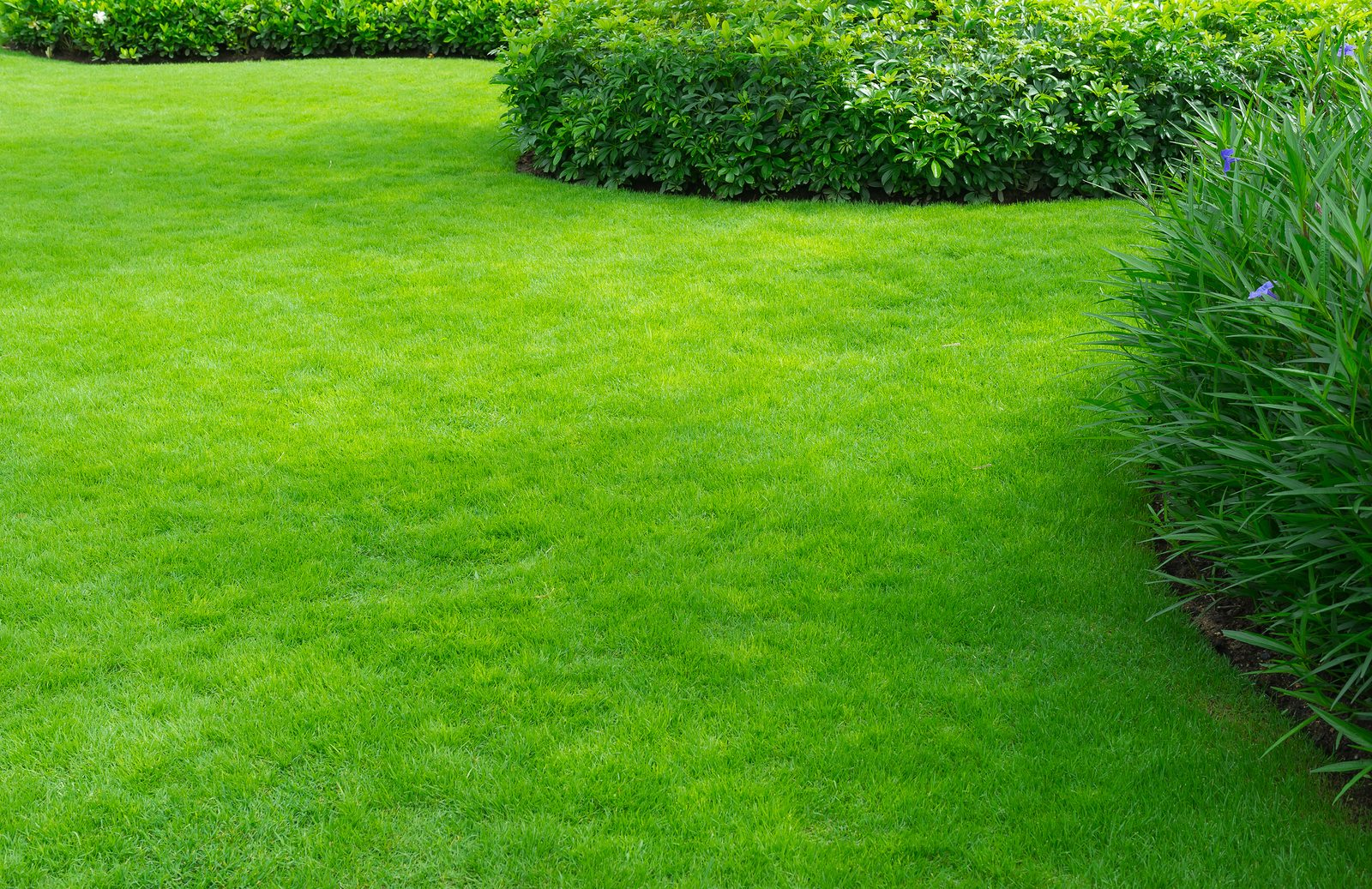 How to Get – and Enjoy! – an Easy-Care Yard