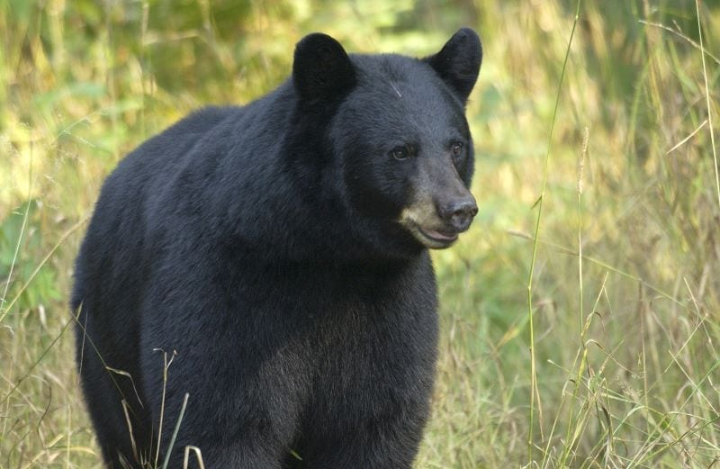 MICHIGAN | Bear hunting clinics are one way the DNR teaches outdoor skills