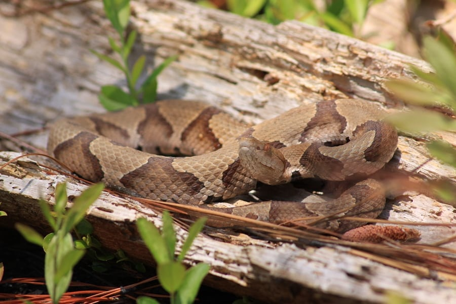 KANSAS | Be Snake Savvy and Be Safe In the Outdoors