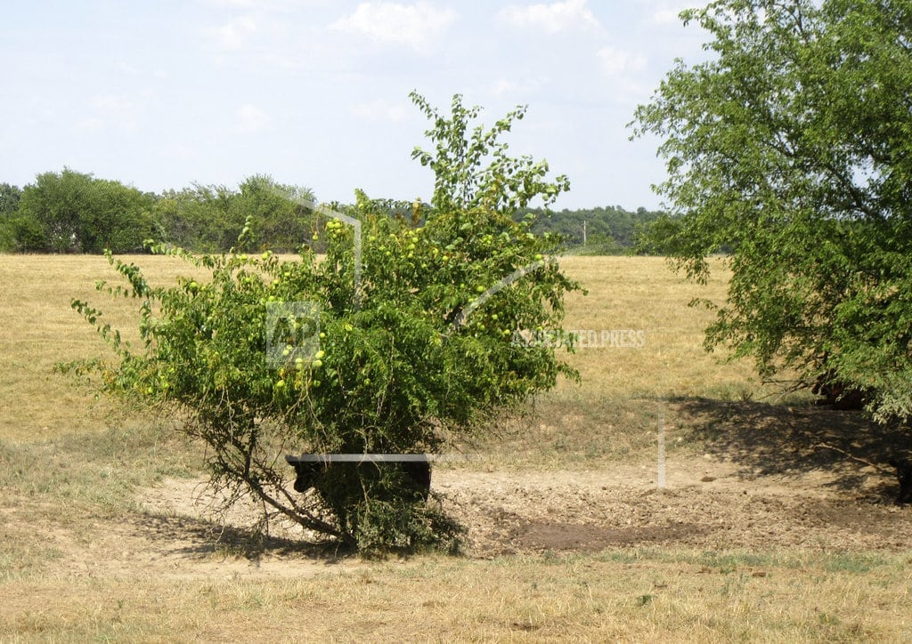 ST. LOUIS | Drought takes toll on Missouri farmers' crops, cattle