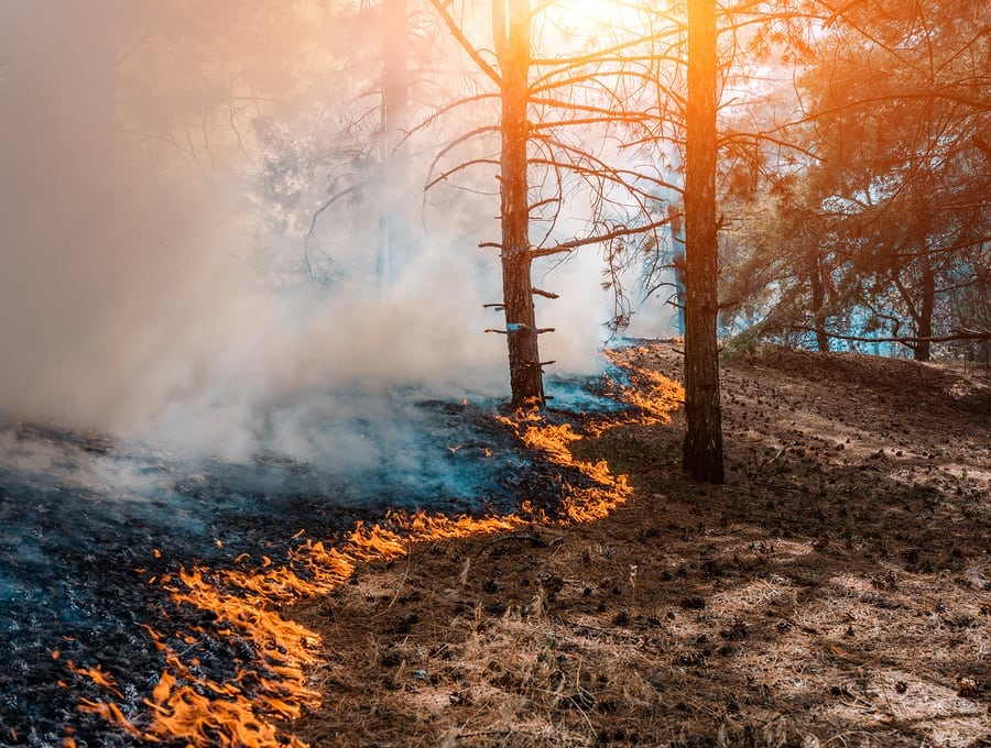 American Optometric Association (AOA) News: 'Like Armageddon:' Doctor of optometry depicts historic wildfire