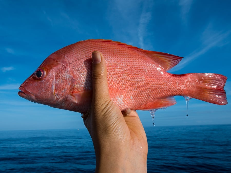 TEXAS | Red Snapper Season Closes in Federal Waters Wednesday, Aug. 22