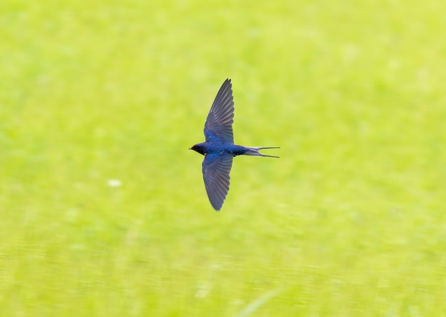 WISCONSIN | Conference tackles plunging populations of martins, swallows, swifts, other insect-eaters