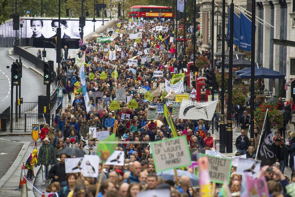 LONDON | Marchers demand better protection for British wildlife