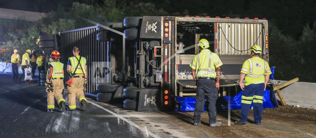ATLANTA | Cattle roundup over: Last cow caught weeks after truck crash