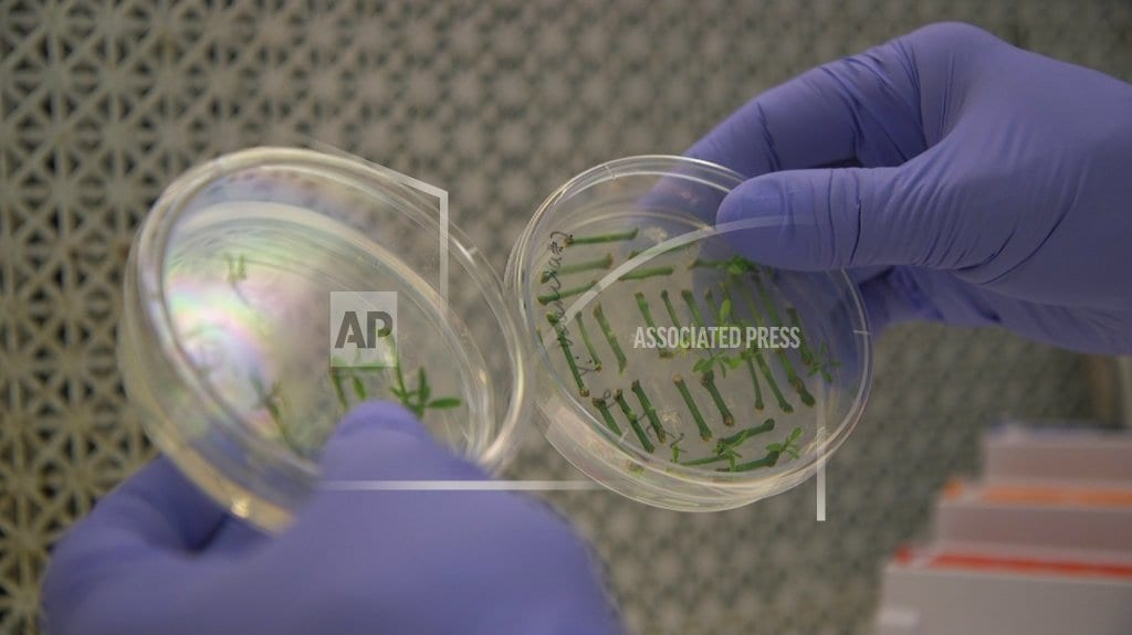 WASHINGTON | Gene-edited food is coming, but will shoppers buy?