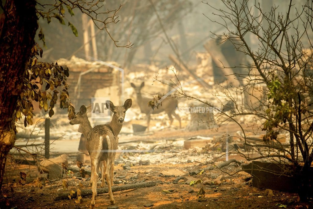 CHICO, Calif. | The Latest: Fire's smoke delays 200 flights in San Francisco
