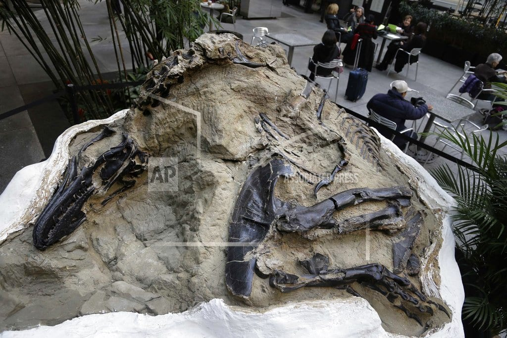 HELENA, Mont. | Fight over dinosaur fossils comes down to what's a mineral