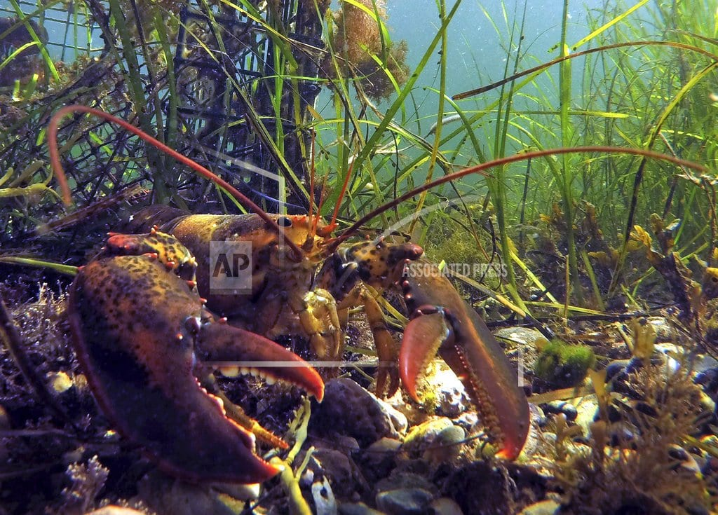 PORTLAND, Maine | Feds: US fishermen had good year aided by lobsters, scallops