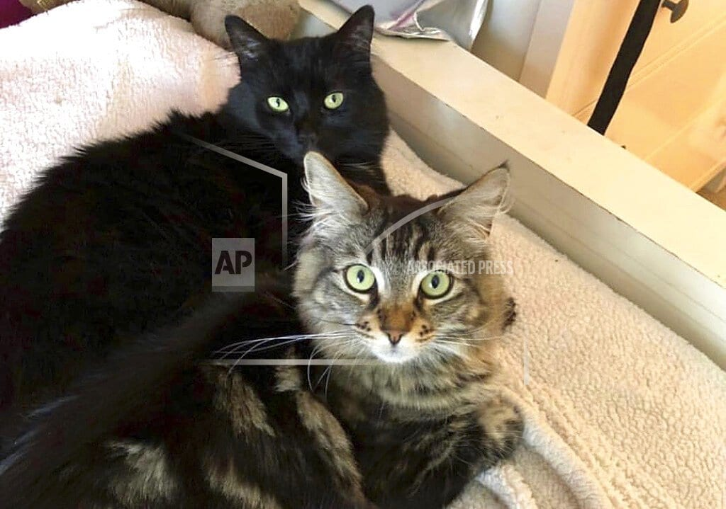 SAN JOSE, Calif   Silicon Valley landlord rents $1,500 studio to 2 cats