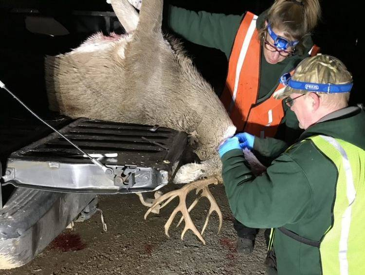Missouri Department of Conservation News: MDC Test Results Reveal More Deer With Deadly CWD