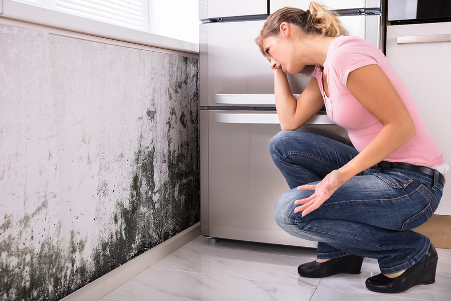 'Finding Mold in a New Home' Infographic Demonstrates How to Check for Mold Before It's Too Late