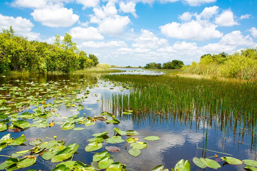 Florida Governor Ron DeSantis Requests $625 Million in Recurring Funds for Everglades Restoration, Protection of Water Resources