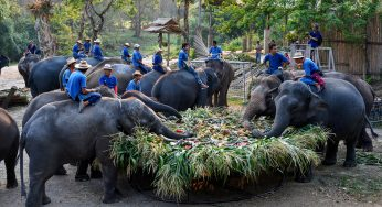 Thai elephants starve due to COVID-19 outbreak, nationwide curfew since Friday